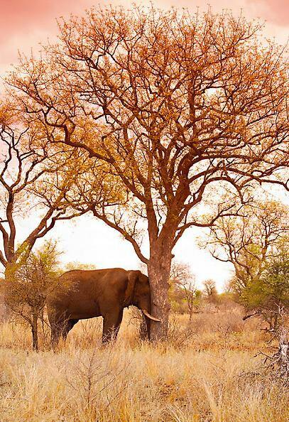 peter lik elephant